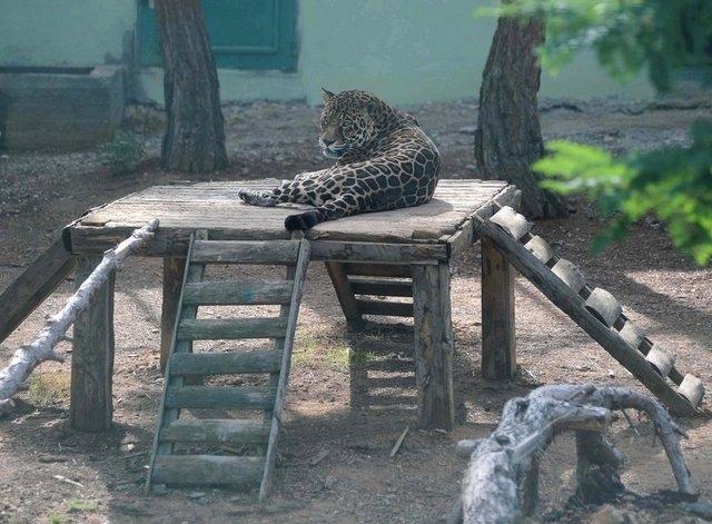 En Büyük Hayvanat Bahçesi galerisi resim 1