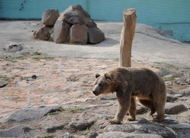 En Büyük Hayvanat Bahçesi galerisi resim 17