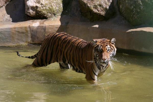 En Büyük Hayvanat Bahçesi galerisi resim 6