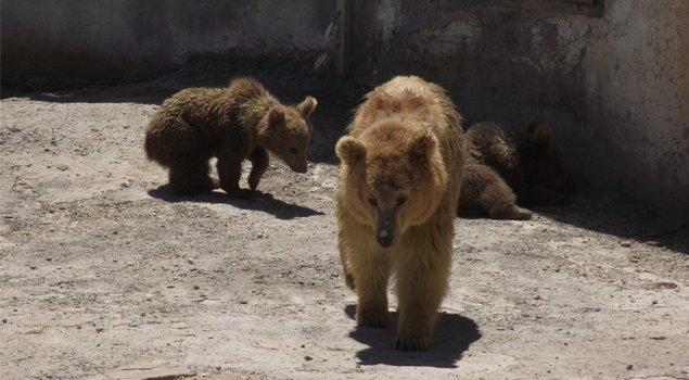 En Büyük Hayvanat Bahçesi galerisi resim 7
