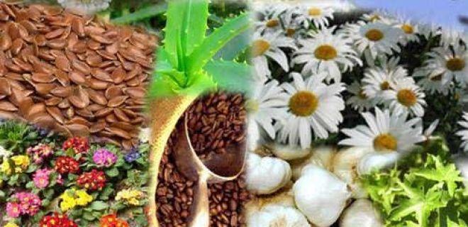 Dünyanın En Faydalı Bitkileri