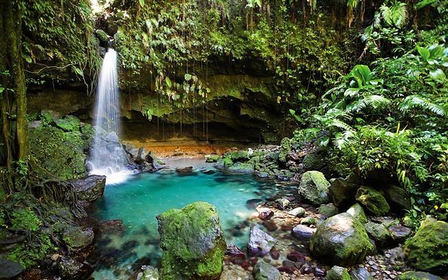 Dünyanın En Güzel Yağmur Ormanları galerisi resim 1