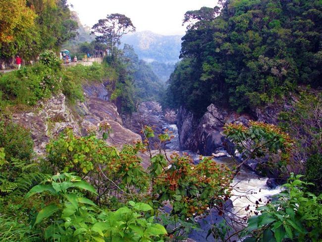 Dünyanın En Güzel Yağmur Ormanları galerisi resim 10