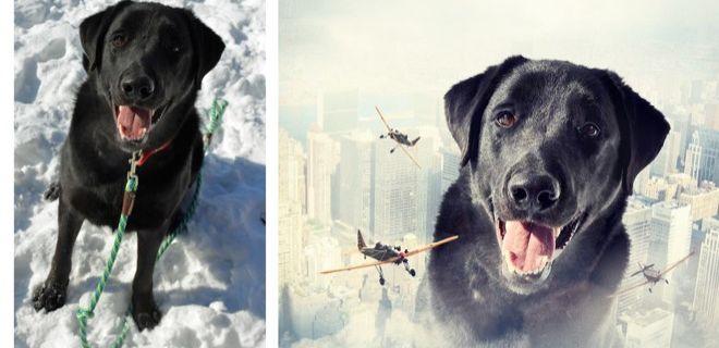Köpeklerle İlgili Yapılmış En İyi Photoshop'lar