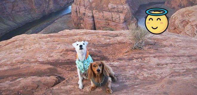 Instagram Ünlüsü Gezgin Köpekler