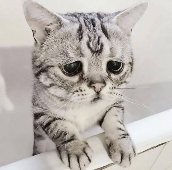 Dünyanın En Mutsuz Bakışlı Kedisi Luhu galerisi resim 13