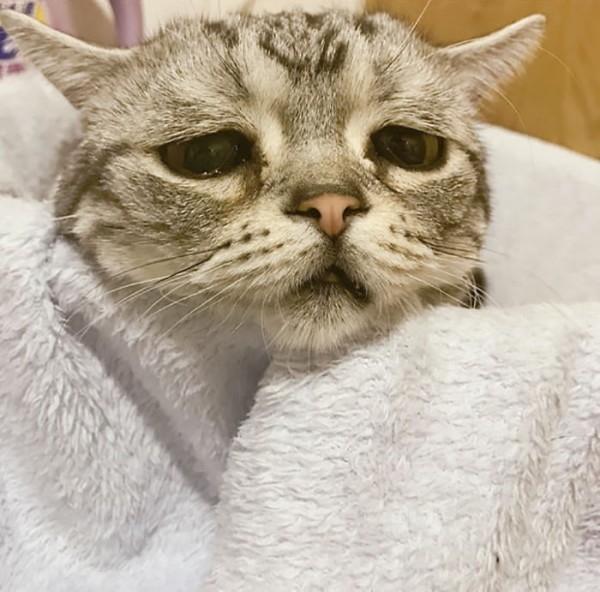 Dünyanın En Mutsuz Bakışlı Kedisi Luhu galerisi resim 14
