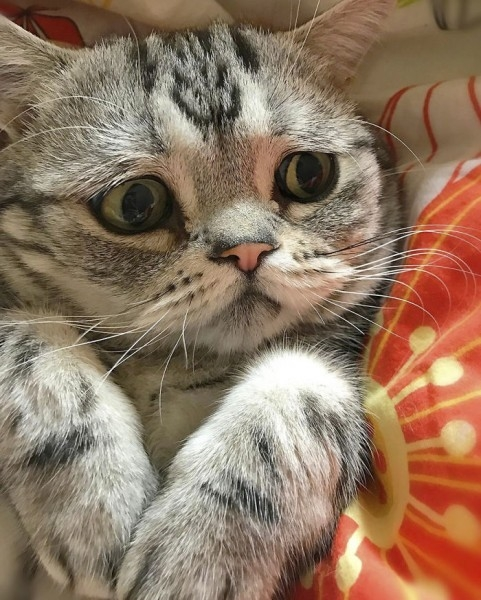 Dünyanın En Mutsuz Bakışlı Kedisi Luhu galerisi resim 4