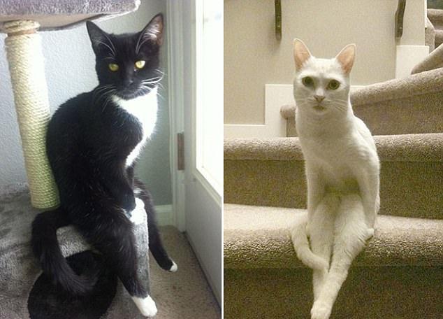 Oturan Kedilerin Pozlarına Çok Şaşıracaksınız galerisi resim 5