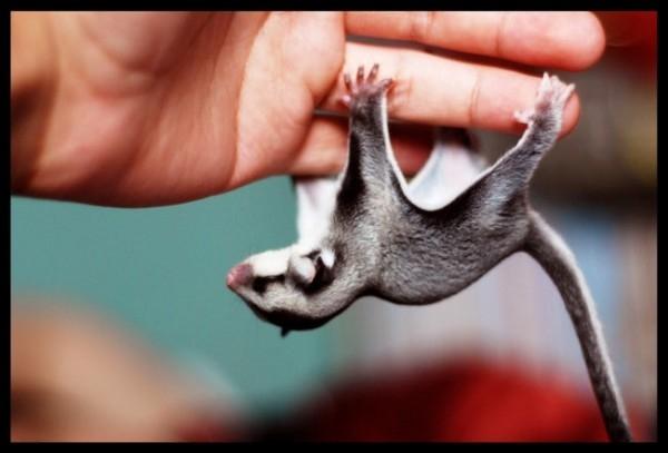 Minicik Boylarıyla Dünyanın En Sevimli Hayvanları galerisi resim 19