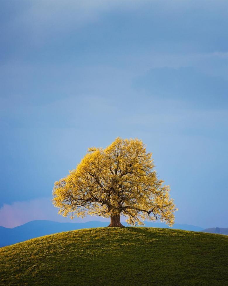Doğa Aşığı Fotoğrafçının Çektiği Muazzam Fotoğraflar galerisi resim 9