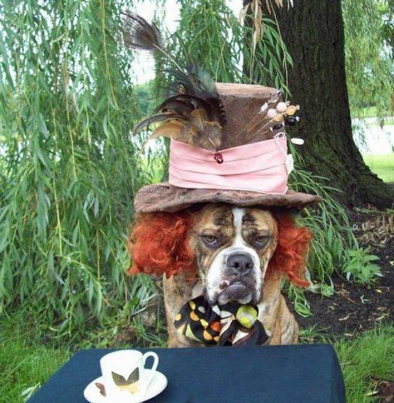 Cadılar Bayramı İçin Hazırlanan Birbirinden Komik Köpekler galerisi resim 1