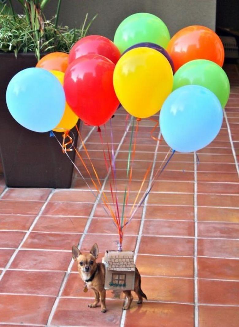 Cadılar Bayramı İçin Hazırlanan Birbirinden Komik Köpekler galerisi resim 15