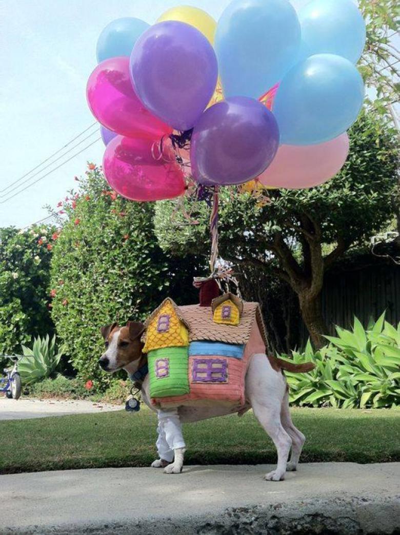 Cadılar Bayramı İçin Hazırlanan Birbirinden Komik Köpekler galerisi resim 9