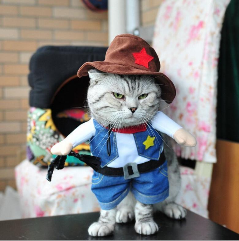 Cadılar Bayramı İçin Yapılmış Muhteşem Kedi Kostümleri galerisi resim 17