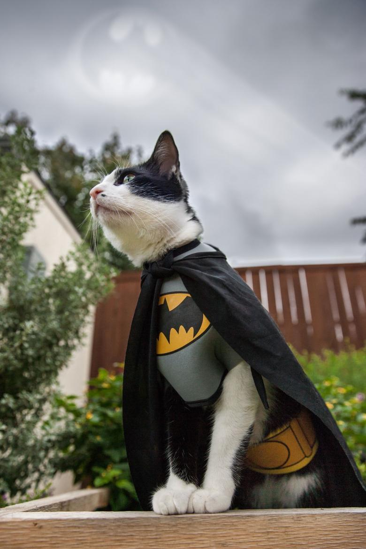 Cadılar Bayramı İçin Yapılmış Muhteşem Kedi Kostümleri galerisi resim 18