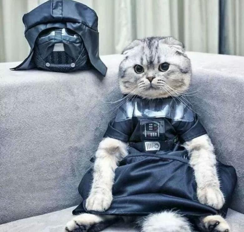 Cadılar Bayramı İçin Yapılmış Muhteşem Kedi Kostümleri galerisi resim 19