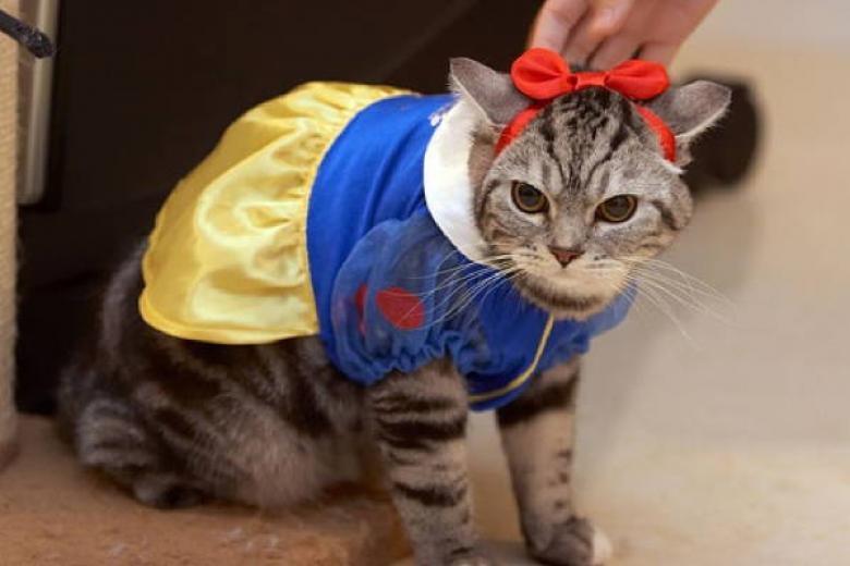Cadılar Bayramı İçin Yapılmış Muhteşem Kedi Kostümleri galerisi resim 26