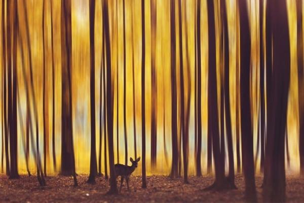En Güzel Sonbahar Fotoğrafları galerisi resim 10