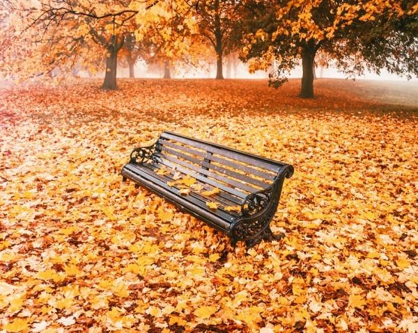 En Güzel Sonbahar Fotoğrafları galerisi resim 5