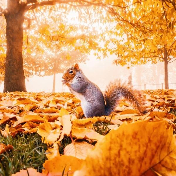 En Güzel Sonbahar Fotoğrafları galerisi resim 7
