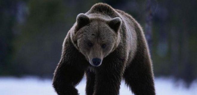 Şans Getirdiğine İnanılan Hayvanlar