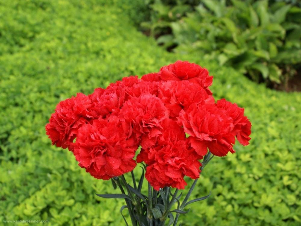 Hangi Çiçek Neyi Anlatıyor galerisi resim 4