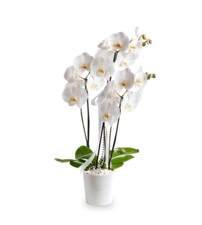 Hangi Çiçek Neyi Anlatıyor galerisi resim 6