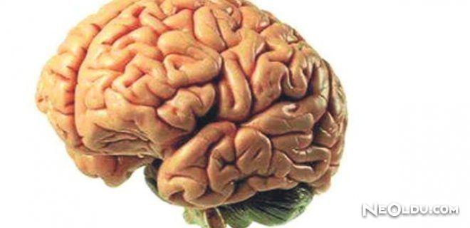 Kadın ve Erkek Beyni Üzerine Araştırma Yapıldı