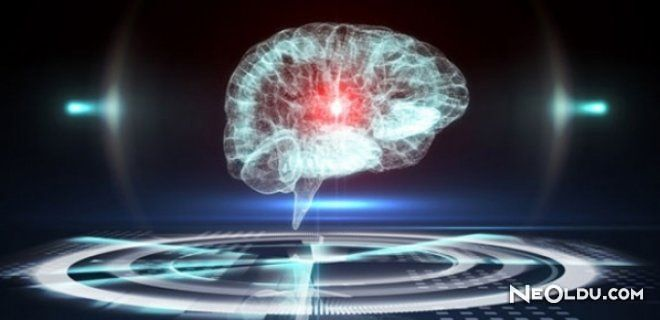 Laboratuvar Ortamında İnsan Beyni Üretildi