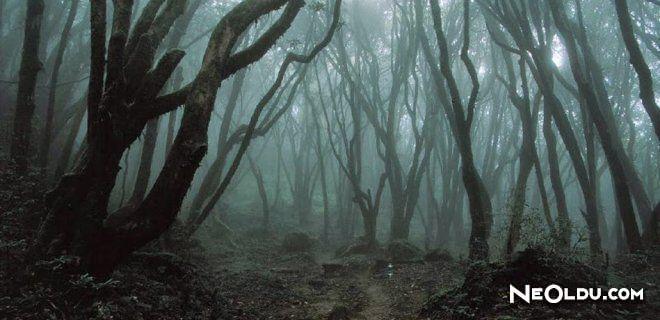 Dünyada Görebileceğiniz En Ürkütücü Orman