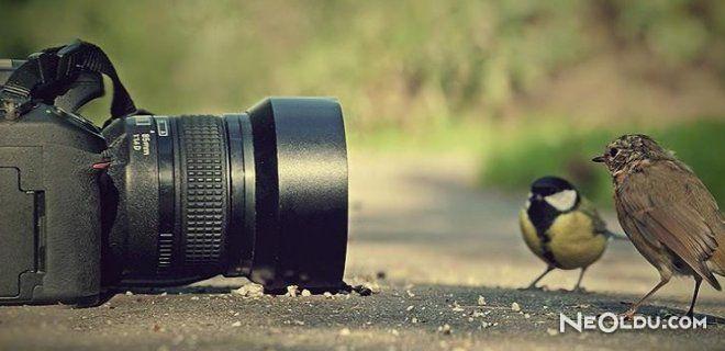 Dijital Fotoğraf Makinesi Alırken Nelere Dikkat Etmeliyiz