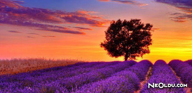 Doğal Güzellikleriyle Avrupa Kıtası