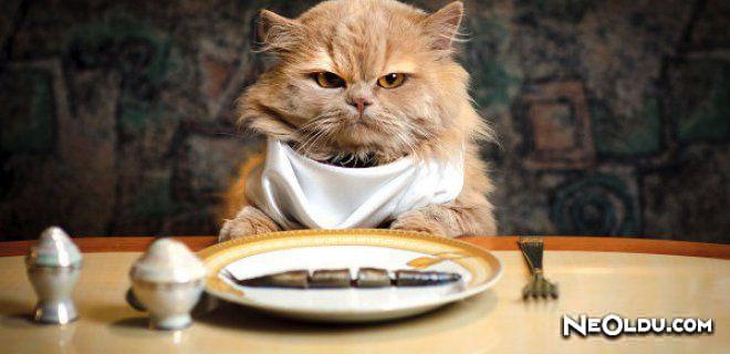 Kaliteli Beslenmek Her Kedinin Hakkı! İştah Kabartan En İyi Kedi Mamaları