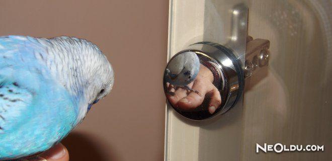 Muhabbet Kuşu Bakımı Nasıl Olmalıdır?