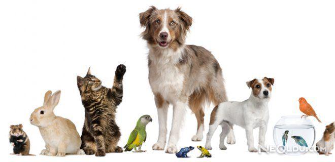 Hayvanlarda Cinsiyet Nasıl Anlaşılır ?