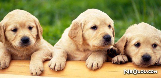 Yavru Köpek Bakımı & Tuvalet Eğitimi ve Beslenme Tablosu
