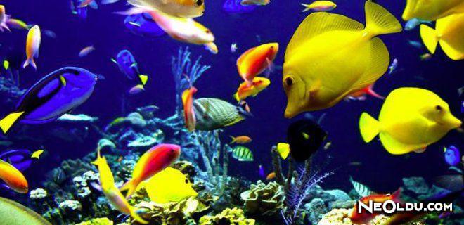 Deniz Akvaryumu Bakımı