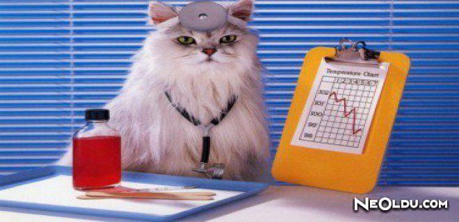 Kedi Aşıları