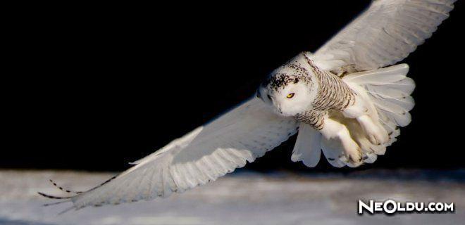 Dünyanın En Yırtıcı Kuşları