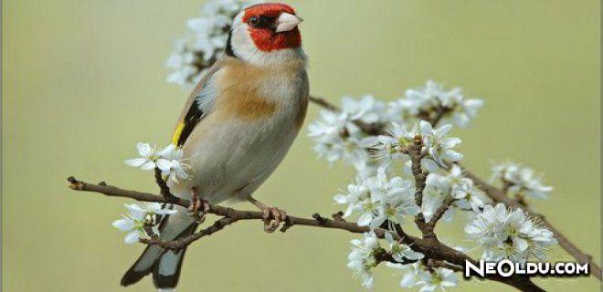 En İyi Saka Kuşu Yemleri