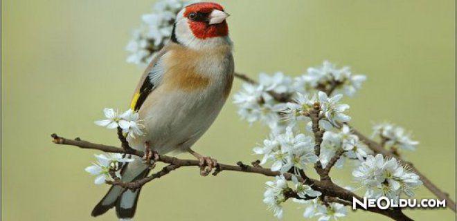 Rüyada Saka Kuşu Görmek Ne Anlama Gelir?