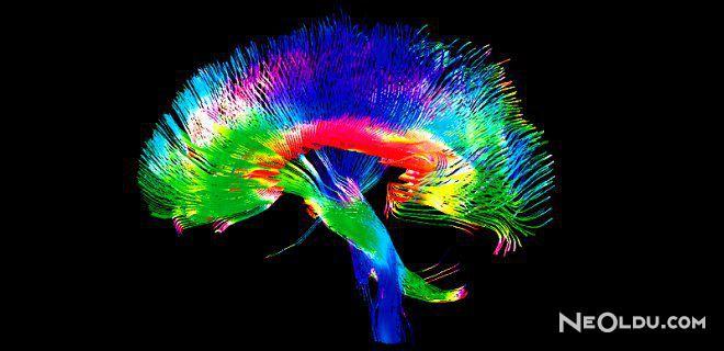 2 Yıl İçinde Beyin Okuma Çağı Başlayacak