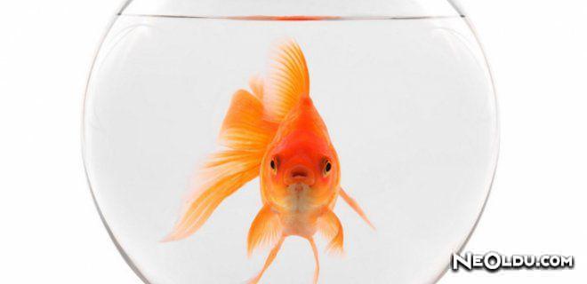 Rüyada Japon Balığı Görmek Ne Anlama Gelir?