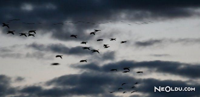 Uçağın nasıl çöktüğünü görmek için (rüya kitap): anlam ve yorum
