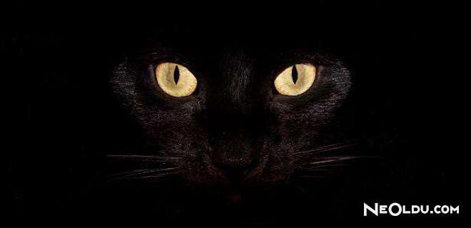 Rüyada Kara Kedi Görmek Ne Anlama Gelir