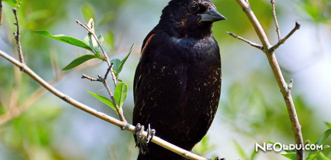 Rüyada Siyah Kuş Görmek Ne Anlama Gelir?