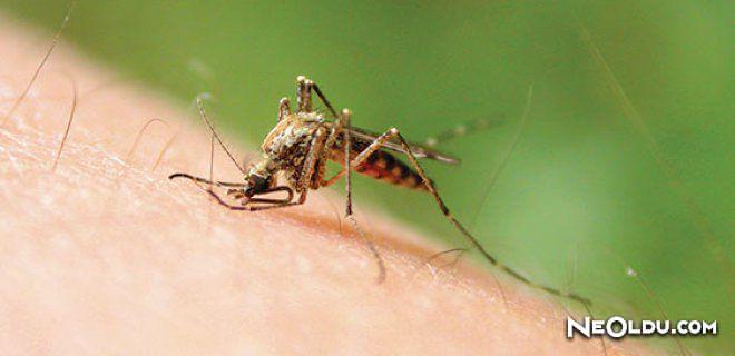 Rüyada Sivrisinek Görmek Ne Anlama Gelir?