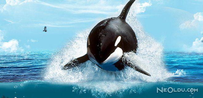 Okyanusun Efendileri - Katil Balinalar