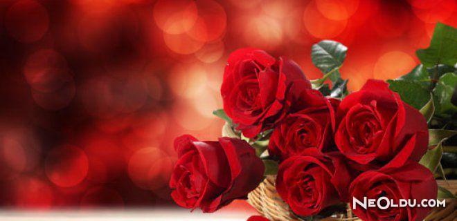 Rüyada Kırmızı çiçek Görmek Ne Anlama Gelir